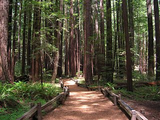 Click image for larger version  Name:Armstrong Redwoods 2.JPG Views:71 Size:406.1 KB ID:36714