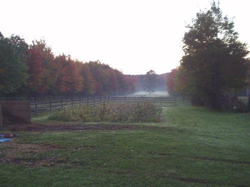 Click image for larger version  Name:backyard.jpg Views:300 Size:26.1 KB ID:3712