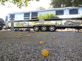 Click image for larger version  Name:1804 Tucson Lemons (Small).JPG Views:17 Size:185.4 KB ID:387933