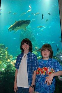 Click image for larger version  Name:Aquarium-2.jpg Views:65 Size:132.7 KB ID:38806