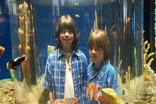 Click image for larger version  Name:Aquarium-3.jpg Views:73 Size:155.4 KB ID:38807