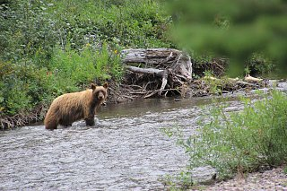 Click image for larger version  Name:Mama bear comming over to check out our camp site!.jpg Views:10 Size:460.5 KB ID:388563