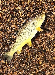 Click image for larger version  Name:Trout 052321 (2).jpg Views:17 Size:197.9 KB ID:396317