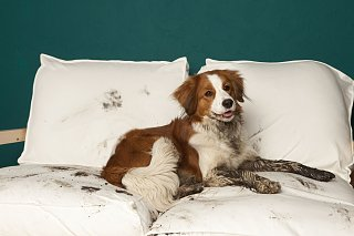 Click image for larger version  Name:paw-plunger-dog-mud-1558453923.jpg Views:16 Size:208.1 KB ID:400556