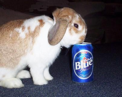 Click image for larger version  Name:DrunkBunny-edwin1.jpg Views:68 Size:27.0 KB ID:40522