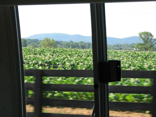 Click image for larger version  Name:KY tobacco field.jpg Views:75 Size:54.7 KB ID:41954