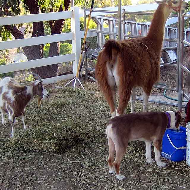 Click image for larger version  Name:hooved beasts and blaze 2.jpg Views:52 Size:116.7 KB ID:41975