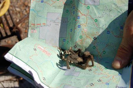 Click image for larger version  Name:Tarantula.jpg Views:71 Size:59.8 KB ID:42089