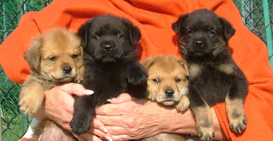 Click image for larger version  Name:pups1.jpg Views:64 Size:95.9 KB ID:42843