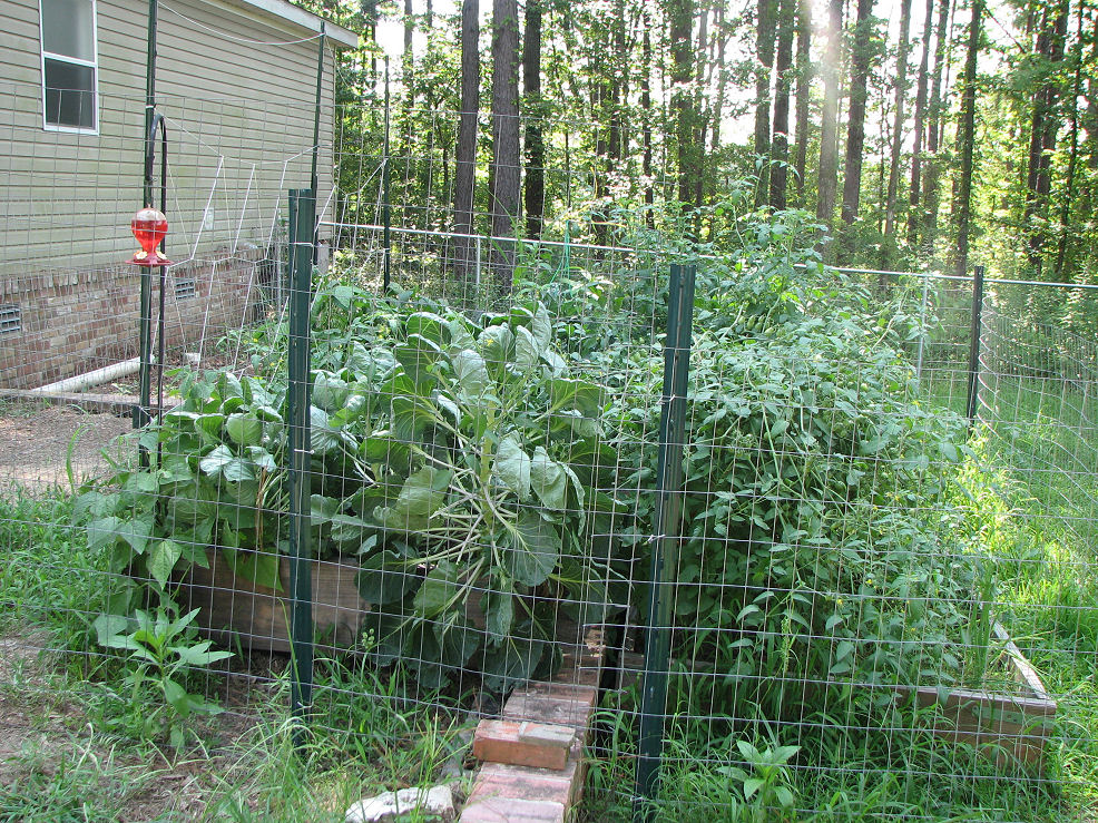 Click image for larger version  Name:07-08-07 Garden from left.JPG Views:68 Size:383.3 KB ID:43092