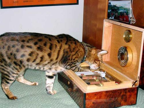 Click image for larger version  Name:cheetah.jpg Views:67 Size:38.4 KB ID:43359