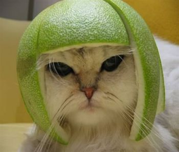 Click image for larger version  Name:tequila-kitty.jpg Views:52 Size:16.1 KB ID:43702