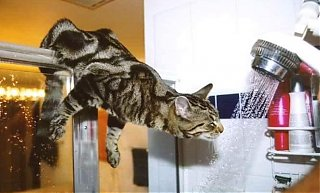 Click image for larger version  Name:animal-cat-shower-water-thirsty-drink.jpg Views:64 Size:74.3 KB ID:44982