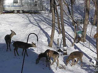 Click image for larger version  Name:fivedeer.jpg Views:364 Size:44.4 KB ID:4548
