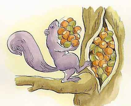 Click image for larger version  Name:squirrel nuts.jpg Views:64 Size:37.1 KB ID:45504