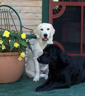 Click image for larger version  Name:taz & haily porch ls.jpg Views:364 Size:65.9 KB ID:4573
