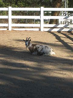 Click image for larger version  Name:GOAT.jpg Views:78 Size:39.1 KB ID:45776