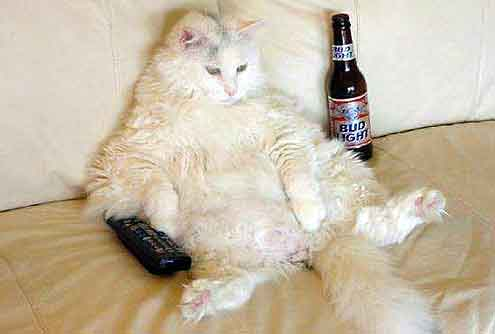 Click image for larger version  Name:DrunkCat.jpg Views:43 Size:23.1 KB ID:46123