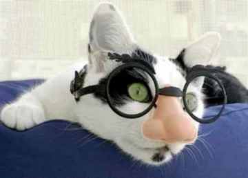 Click image for larger version  Name:CatDisguise.jpg Views:55 Size:7.0 KB ID:46124
