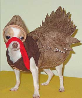 Click image for larger version  Name:dog turkey.jpg Views:66 Size:47.8 KB ID:47577