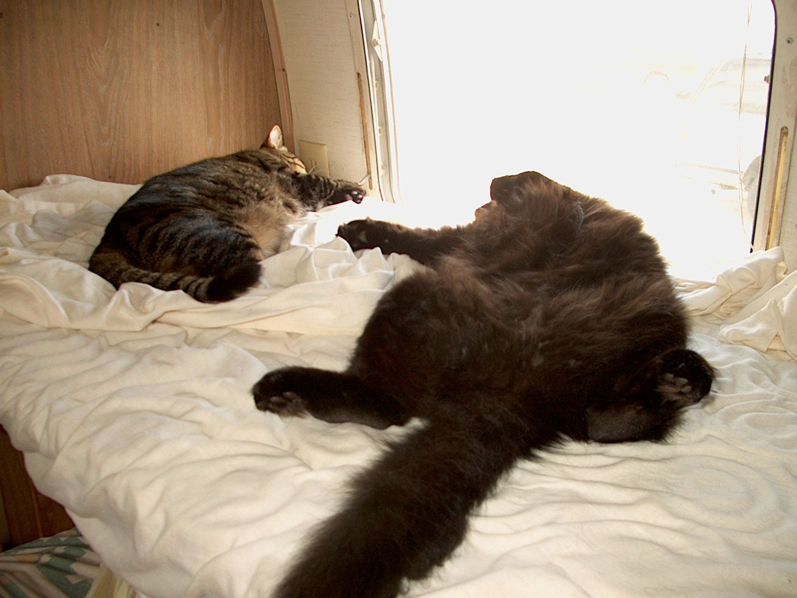 Click image for larger version  Name:campin cats.JPG Views:58 Size:521.2 KB ID:49139