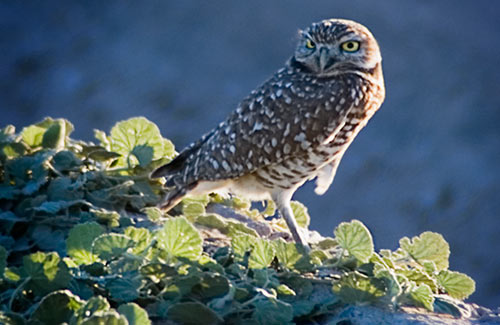 Click image for larger version  Name:owl.jpg Views:83 Size:40.3 KB ID:49637