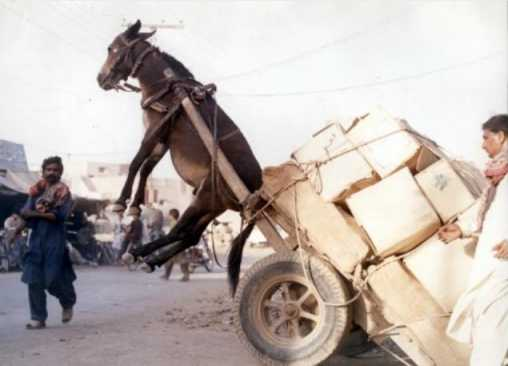 Click image for larger version  Name:OL-Donkey-Cart.jpg Views:272 Size:16.5 KB ID:49699