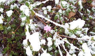 Click image for larger version  Name:springiscoming.jpg Views:172 Size:92.1 KB ID:4985