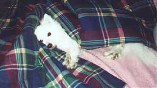 Click image for larger version  Name:dogplay10.jpg Views:322 Size:14.4 KB ID:5050
