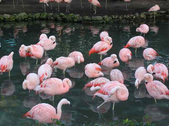 Click image for larger version  Name:flamingos.jpg Views:236 Size:38.6 KB ID:5066