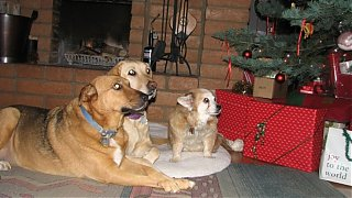 Click image for larger version  Name:dogs.jpg Views:94 Size:187.3 KB ID:51451