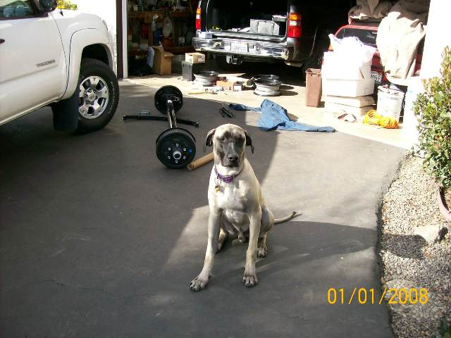 Click image for larger version  Name:Axle guard dog.jpg Views:64 Size:50.4 KB ID:51897