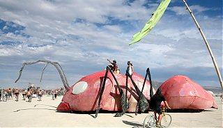 Click image for larger version  Name:IMG_7684 ant car.jpg Views:133 Size:127.0 KB ID:52559
