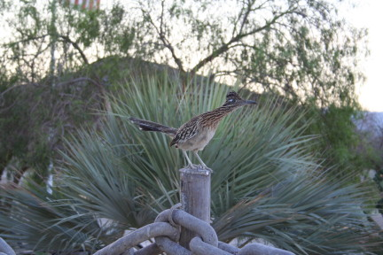 Click image for larger version  Name:Desert Wildlife.JPG Views:90 Size:60.1 KB ID:53797