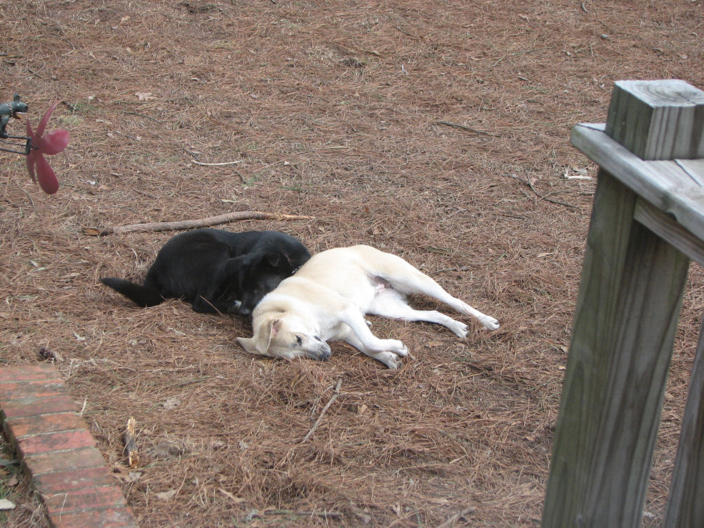 Click image for larger version  Name:Pooped out with Shadow 2-3-08.JPG Views:64 Size:240.7 KB ID:54082