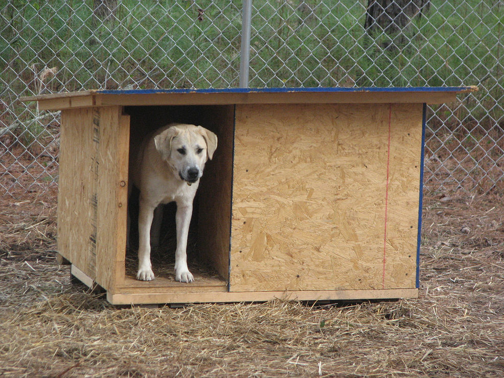 Click image for larger version  Name:Standing in doghouse 2-3-08.JPG Views:60 Size:266.7 KB ID:54083
