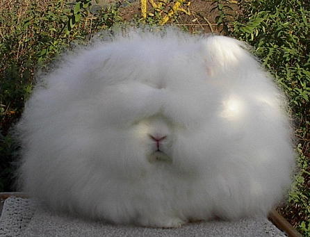 Click image for larger version  Name:Fluffy.jpg Views:64 Size:40.6 KB ID:54671