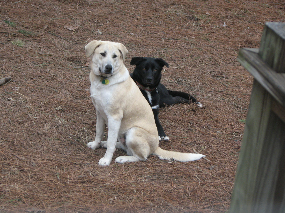 Click image for larger version  Name:Nilla sits with Shadow.jpg Views:68 Size:225.1 KB ID:56839