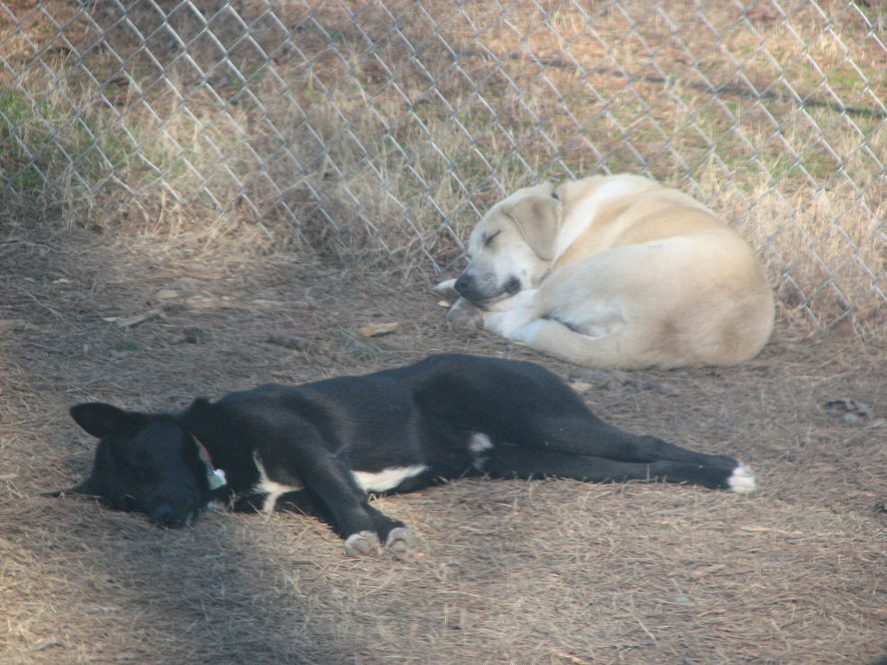 Click image for larger version  Name:Nilla & Shadow sleep.jpg Views:85 Size:191.4 KB ID:56840