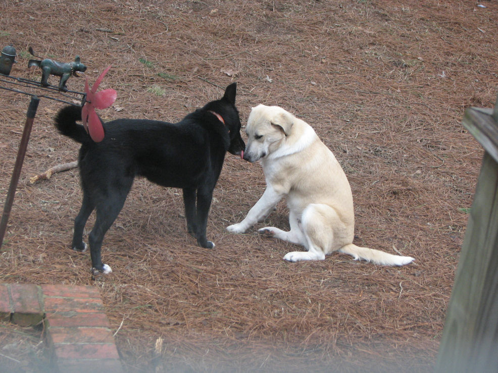Click image for larger version  Name:Nilla gets kiss from Shadow.jpg Views:70 Size:219.6 KB ID:56841