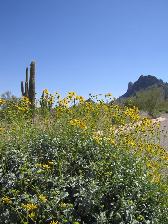 Click image for larger version  Name:Picacho_Mar08_12_Sm.jpg Views:76 Size:146.4 KB ID:56907