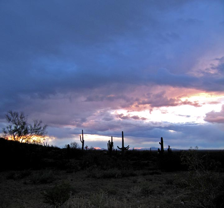 Click image for larger version  Name:Picacho_Mar08_74_Sm.jpg Views:76 Size:73.3 KB ID:56912