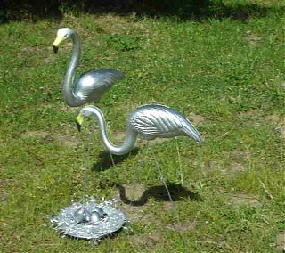 Click image for larger version  Name:Our flamingos.jpg Views:121 Size:31.6 KB ID:57569