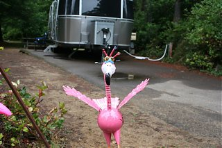 Click image for larger version  Name:Pink Flam.jpg Views:111 Size:94.8 KB ID:57570