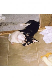 Click image for larger version  Name:harry and armondo taking a break after playing.JPG Views:426 Size:32.2 KB ID:5824
