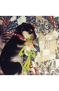 Click image for larger version  Name:armondo and his kermit.JPG Views:414 Size:43.7 KB ID:5826