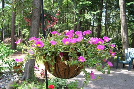 Click image for larger version  Name:Hanging Basket.jpg Views:243 Size:87.9 KB ID:5856