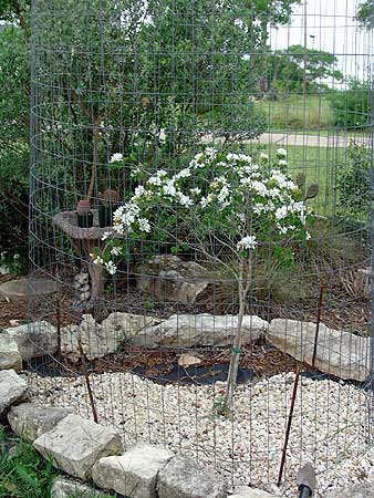 Click image for larger version  Name:OrchidTree.jpg Views:133 Size:48.9 KB ID:5877