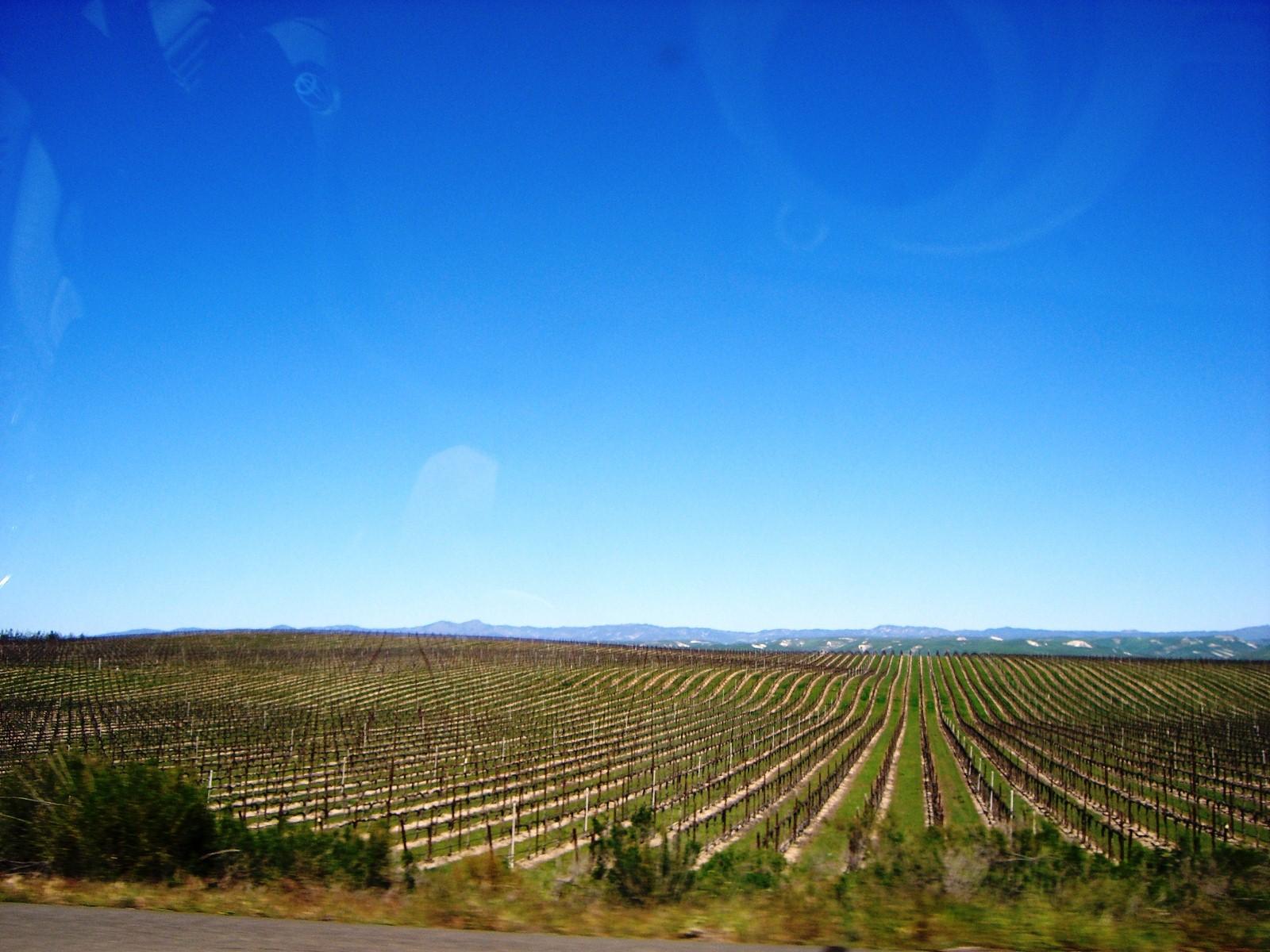 Click image for larger version  Name:vineyards1.JPG Views:63 Size:427.1 KB ID:59387