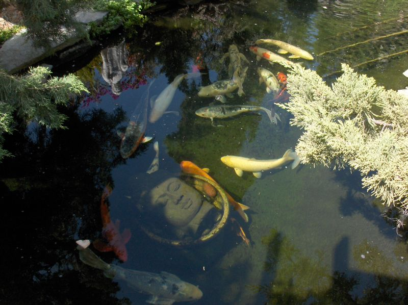 Click image for larger version  Name:'08 Buddhas w koi.jpg Views:58 Size:94.1 KB ID:59782